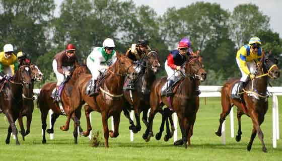 HorseRaceGame.com - Play Free Virtual Horse Race Game Online